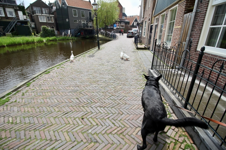The Netherlands - 16