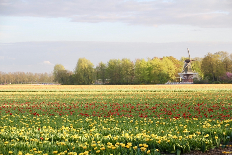 The Netherlands - 35