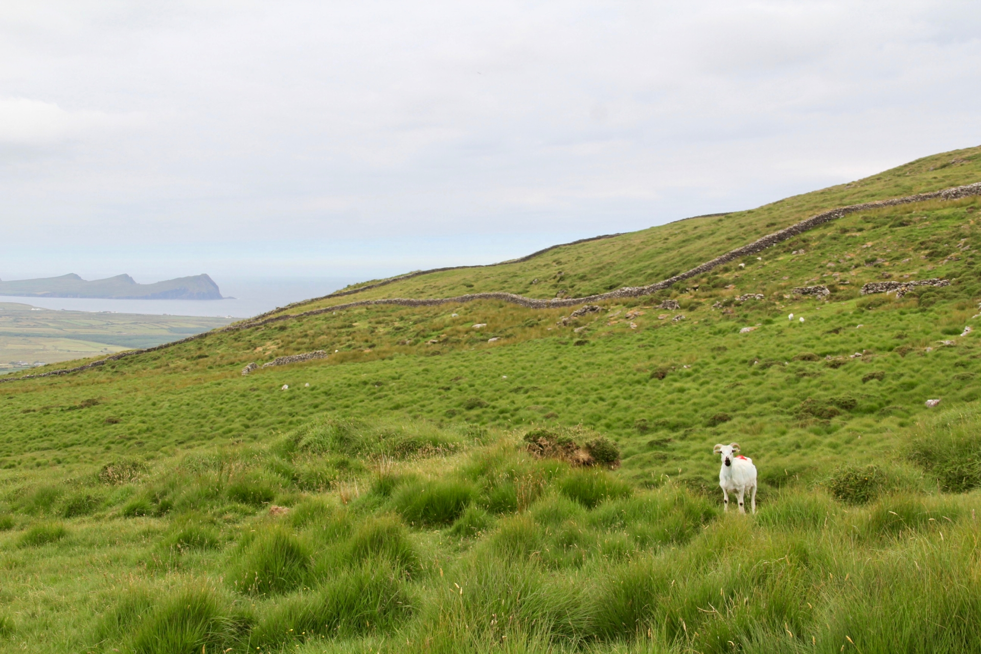 Dingle Peninsula - 41