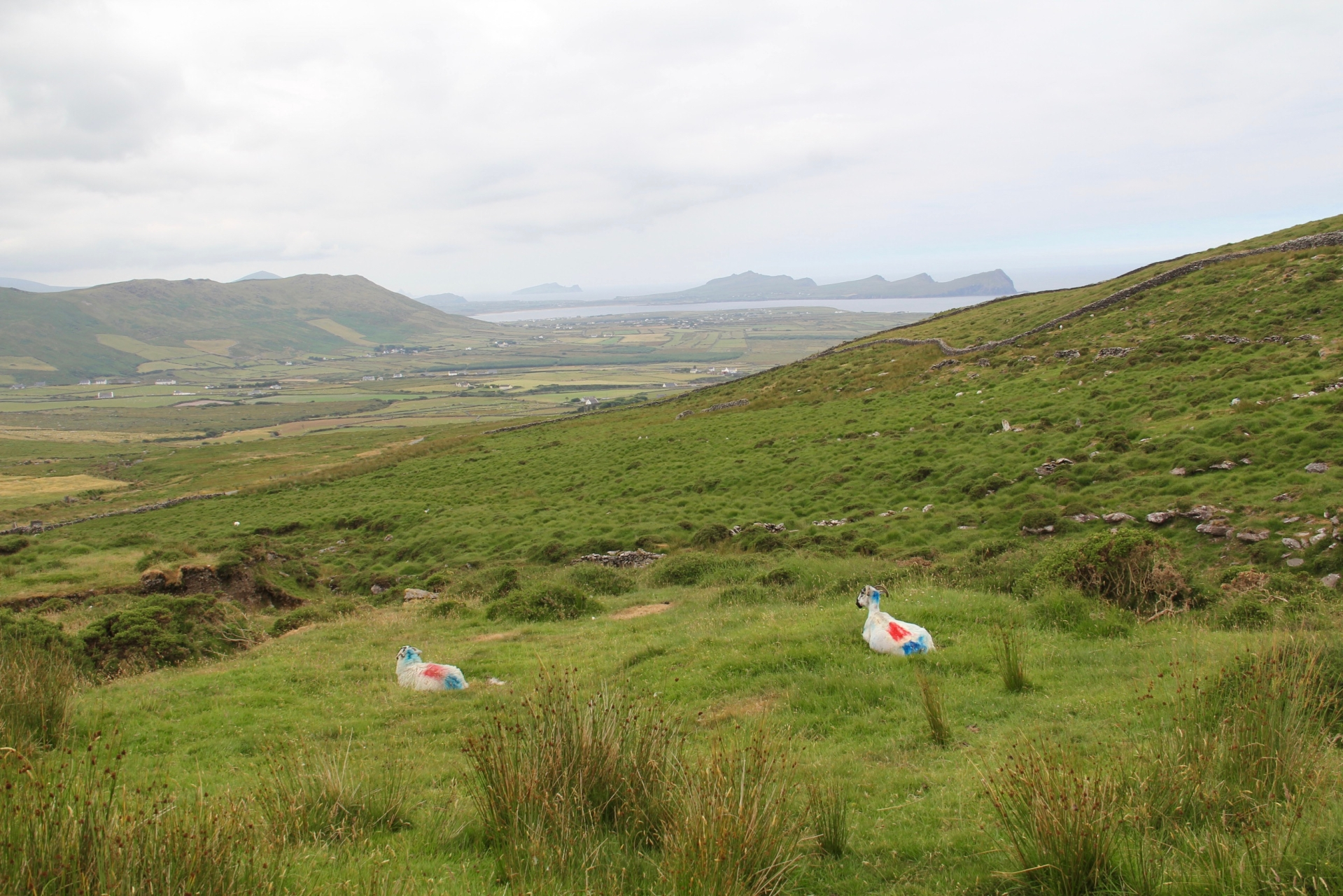 Dingle Peninsula - 43